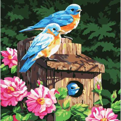 תמונת קנוס ציפורים